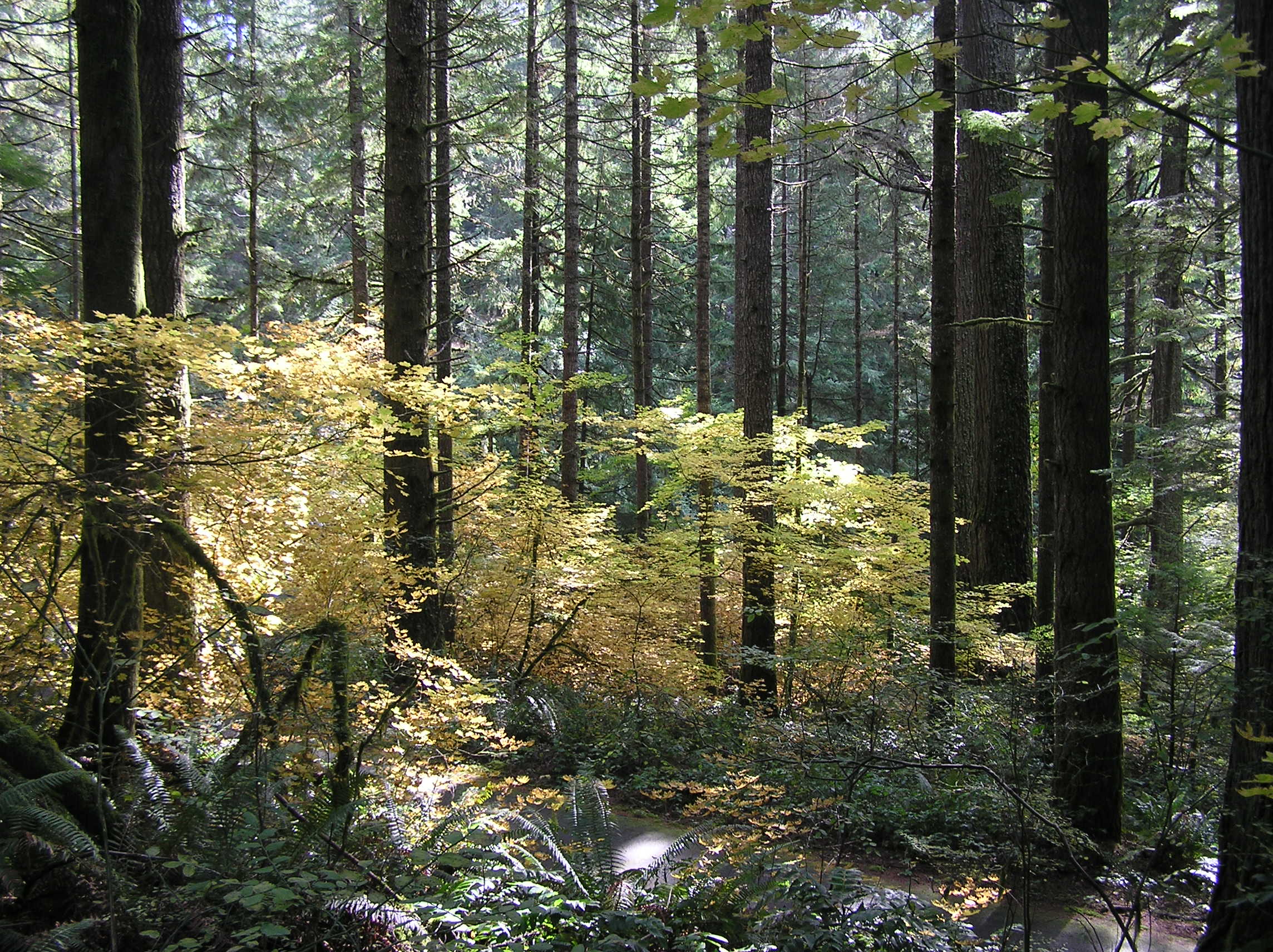 Oregon Forest Scene