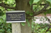 Tree planted by Peter MacDonald