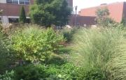 Ohio State University Ornamental Plant Germplasm Center  - Green Roof