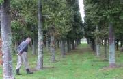 Kauri wood lot