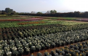Colorweis Nursery