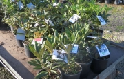Elliotts Wholesale Nursery