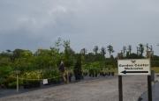Mariposa Nursery