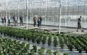 Zealandia Horticulture